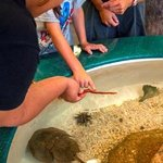 Living River & Touch Tank