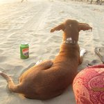 One of Elisa's Rescue Dogs Enjoying Sunset with Me