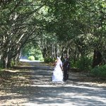 BWR SOME WEDDING AT THE TREE TUNNEL