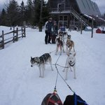 Getting ready to start at Eden Dogsledding