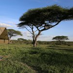 Foto de Ndutu Wildlands Camp
