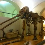 Photo of University of Florence Natural History Museum