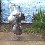 Premier Inn Milton Keynes East - Willen Lakeの写真