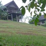 Bilde fra The Cliff & River Jungle Resort