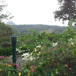 The view from our Cooroora Cottage