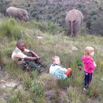 Knysna Elephant Park Lodge照片