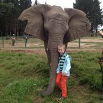 Φωτογραφία: Knysna Elephant Park Lodge