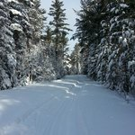 Gorgeous ski trails!