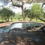 Φωτογραφία: Mvuradona Safari Lodge