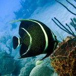 Rincon Diving & Snorkeling Foto