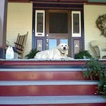 Vicky loved to sit on the steps and watch the world go by.