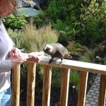 Φωτογραφία: Kaka Retreat Stewart Island