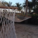 Enjoy the hammocks in the garden area at Solara Surfside
