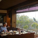 Eagle watching my husband eat breakfast