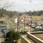 View of trees in bloom from room window