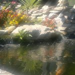 Koi pond @ Watersedge