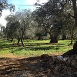 Photo of Masseria Don Sante