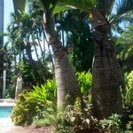Palm trees in pool area