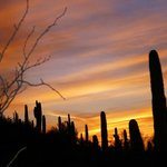 Sunset at Botanical Gardens - Phoenix