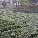 Photo de Landison Longjing Resort