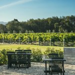 Vineyard views with outside tables