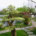 200 Bonsai trees at the botanical gardens