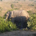 On game drive