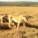 Foto van Bush Lodge - Amakhala Game Reserve