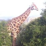 Foto de Bush Lodge - Amakhala Game Reserve