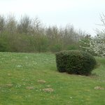 Rural setting (rabbits & molehills in the grounds)