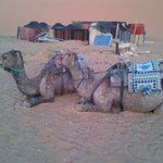 Our Camel to desert