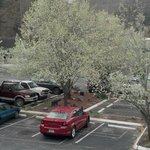 Parking lot with flowering trees view from room