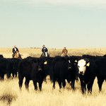ภาพถ่ายของ Burnt Well Guest Ranch Cattle Drive