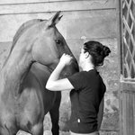 Photo of Academy of Equestrian Arts