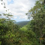 Vista of rainforest from gondola