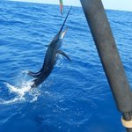 one of the 21 sailfish