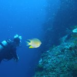 Photo de Bali Reef Divers