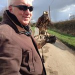 Hawk Walk at the Falconry Centre nearby