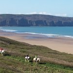 Woolacombe Riding Stables