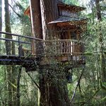 Treehouse Point Foto
