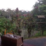 Foto Sepilok Forest Edge Resort