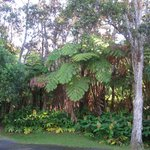 Hapu'u Fern Cottage at Volcano Village Foto