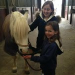 Meeting Ozzie the very friendly pony