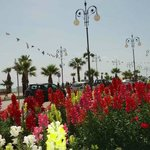 The beauty of the Palm promenade in spring-Finikoudes