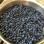 fresh blueberry season runs much of late July/August. Barb & Greg can direct you where to pick!