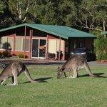 Foto van Halls Gap Valley Lodges