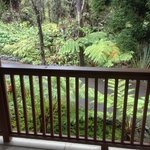 Rain Forest view from deck.