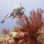 Diving in Gili Trawangan