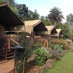 Foto Wildebeest Eco Camp