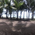 Foto Sarayi, Palm Cove
